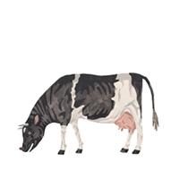 CowburgerTHUMBS