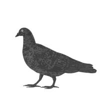 PigeonTHUMB