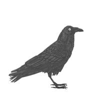 RavenTHUMB