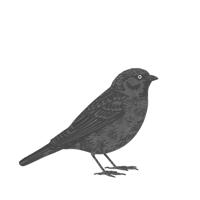 SparrowTHUMB