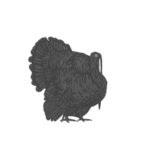 TurkeyTHUMB